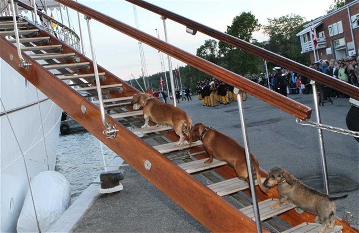 De Royale Hunde Kan Selv Hunden Dk