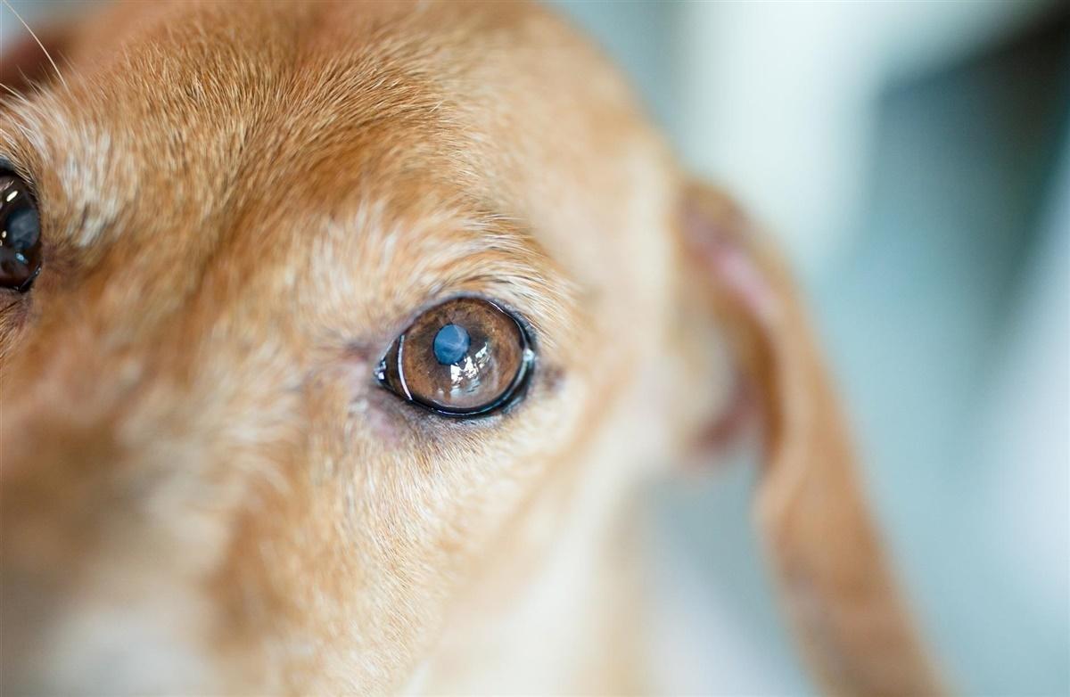 Picture of: Nar Hunden Bliver Blind Hunden Dk