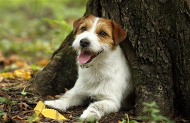 Jack russell overlever fire dage i hul