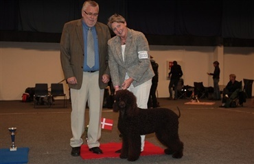 Irish Water Spaniel til tops i Aars