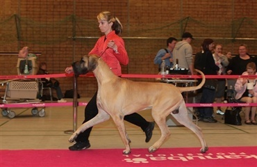 Blaaholms Joker blev Best in Show