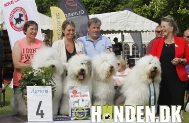 Fredagsquiz: Hvad ved du om old english sheepdog